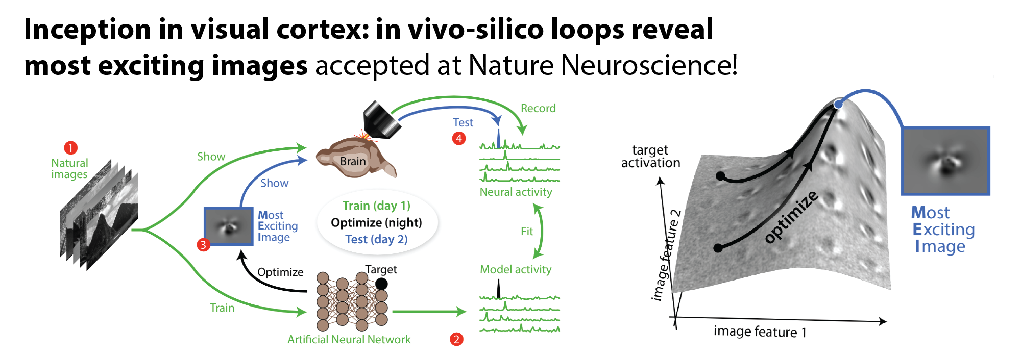 Inception Loops accepted in Nature Neuroscience